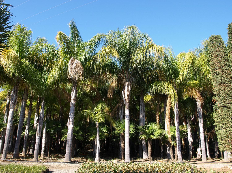 Floryplant – Paisajismo & Jardinería