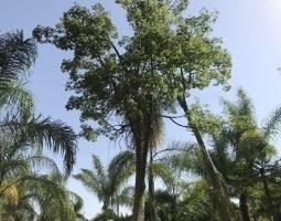 Floryplant - Paisajismo & Jardinería